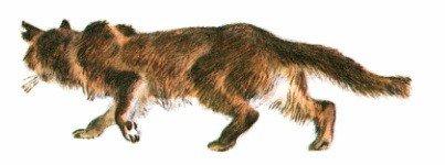 Кот-ворюга - Паустовский К.