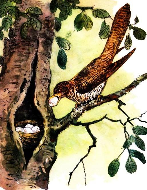 Хитрая птица - Скребицкий Г.