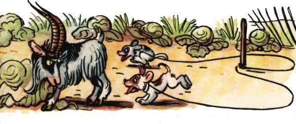 Не ходи, козел, в огород - Сутеев В.Г.