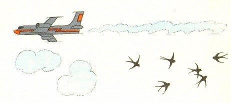 Птица неба не боится - Берестов В.